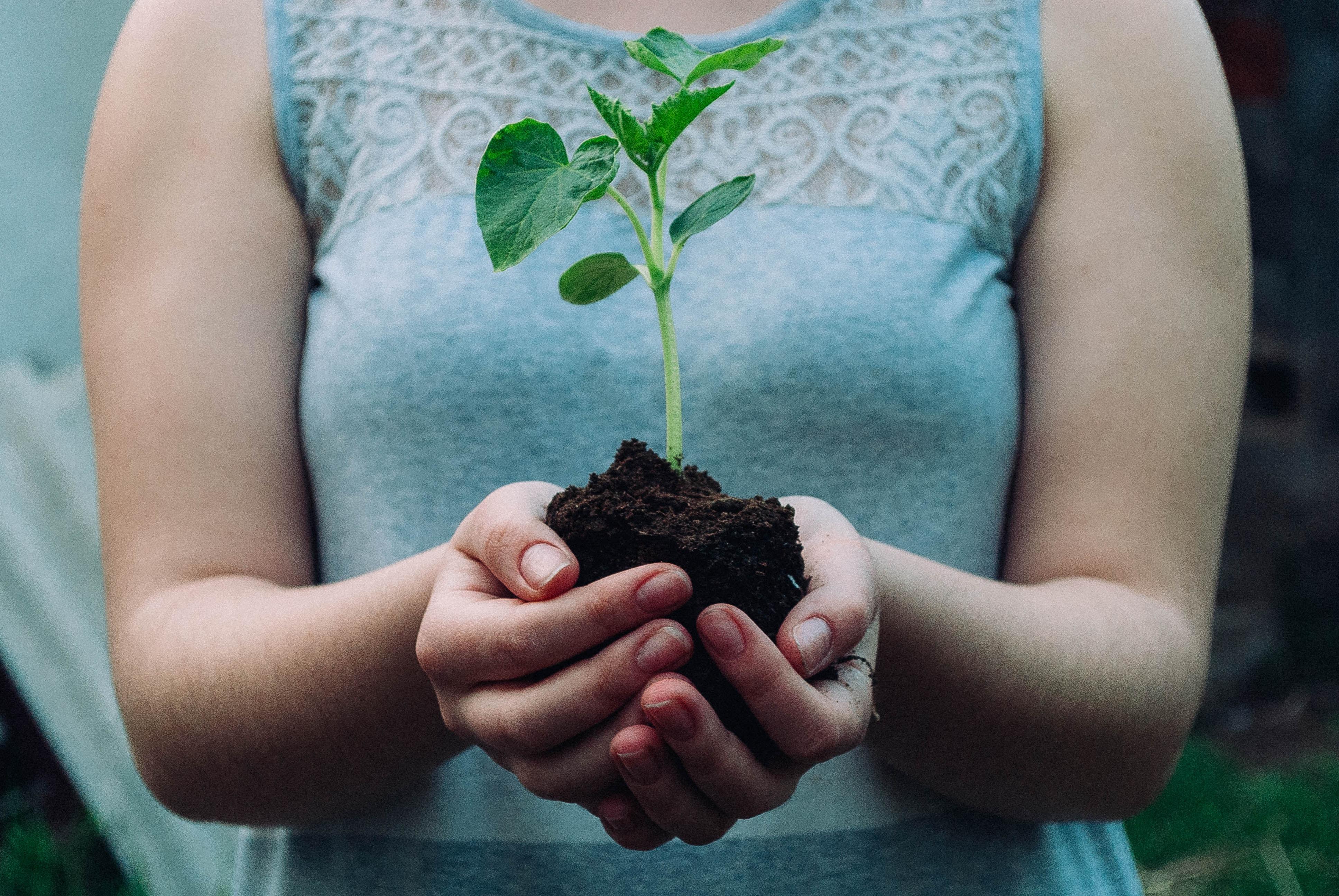植樹活動をする女性
